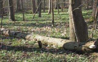 Jarní procházka z Doksan do Brozan