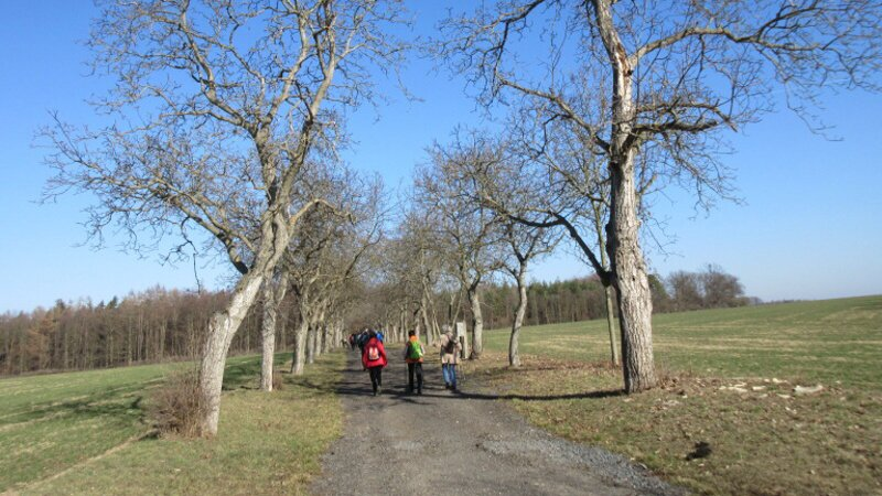 Výlet z Peruce do Libochovic - alej