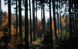 Hornopožárský les