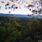 Hornopožárský les 2