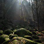 Hornopožárský les 4