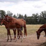 Koně v Třeboni