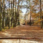 Park u Schwarzenberské hrobky - Třeboň