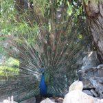 Palmitos Park Gran Canaria 5