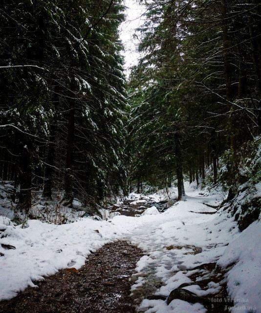 Lesní cesta u Bílé Opavy