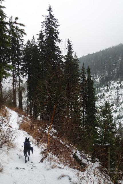 Naučná stezka Bílá Opava - modrá trasa