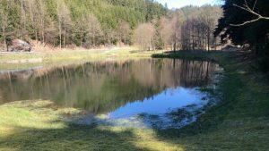 Rybník - Orličky
