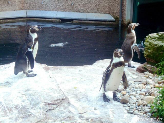 Zoo Norimberk - tučňáci