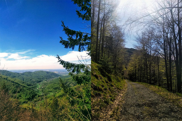 Javorový vrch v Beskydech