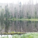 Jezero Laka - Šumava 6