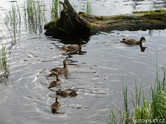 Jezero Laka - Šumava 7