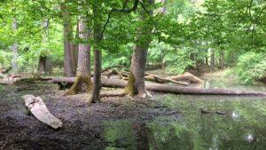 Lužní lesy - Jižní Morava
