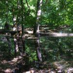 Lužní lesy - Jižní Morava 2