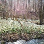 Údolí Chlébského potoka - přírodní rezervace