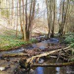 Údolí Chlébského potoka - přírodní rezervace 2