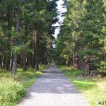 Cesta k rozhledně Blatenský vrch