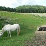 Koně u biofarmy
