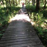 Chodník v lese