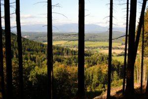 Zvičina les