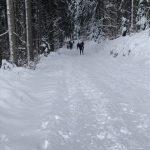 Trasa pro běžkaře v lese u Mravencovky