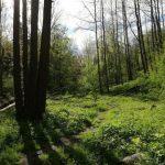 Žandov - Bobří soutěskou k vodopádům