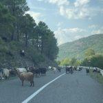 Dopravní zácpa na albánské silnici