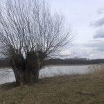Písecké rybníky 2