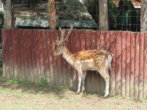 Zoo Stropkov na Slovensku