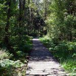 Mannův les