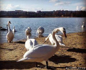 Bolevák - Bolevecký rybník