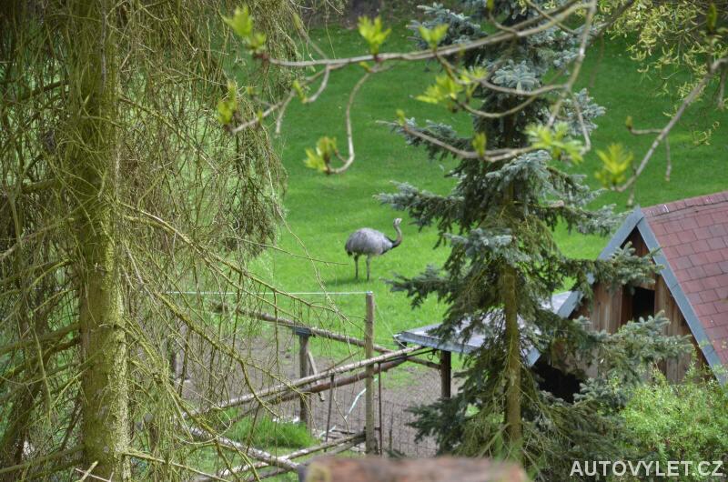 Pštros u Ptačích domků