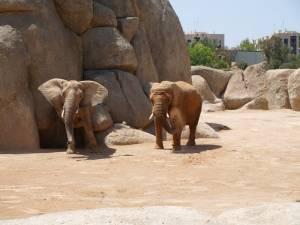 biopark valencie španělsko sloni
