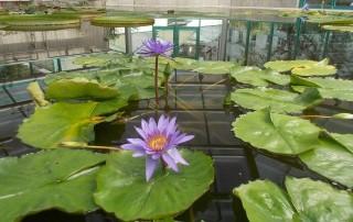 botanická zahrada liberec