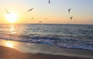bulharsko pláž ptáci