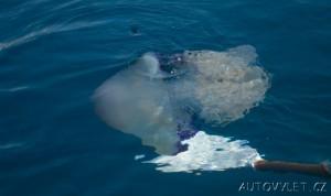 černá hora dovolená meduza