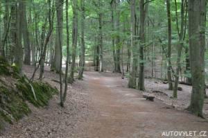 Cesta lesem - vyhlídka Gosan Mezizdroje Polsko