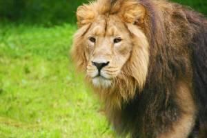 chester zoo velká británie