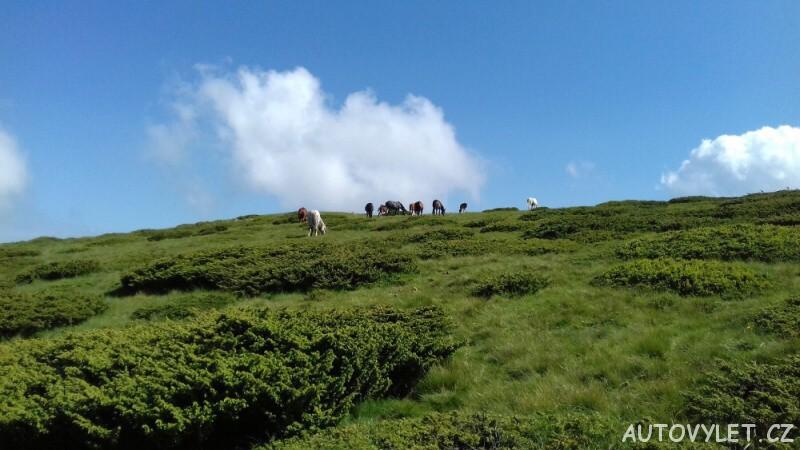 divocí koně na Staré planině