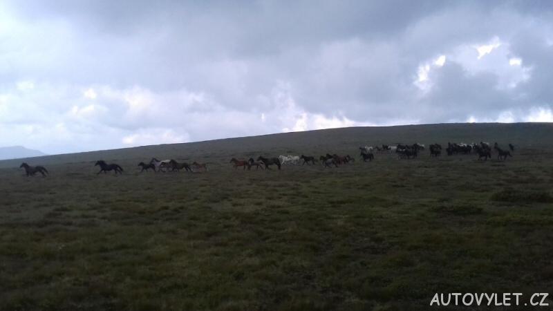 Divocí koně na Staré planině 2