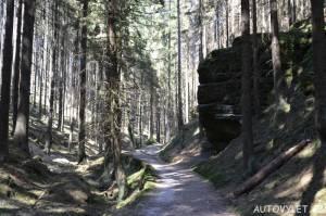Lesem na Mezní louku