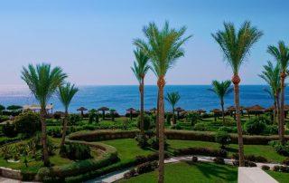 egypt palmy moře