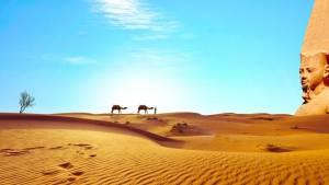 egypt velboudi poušť