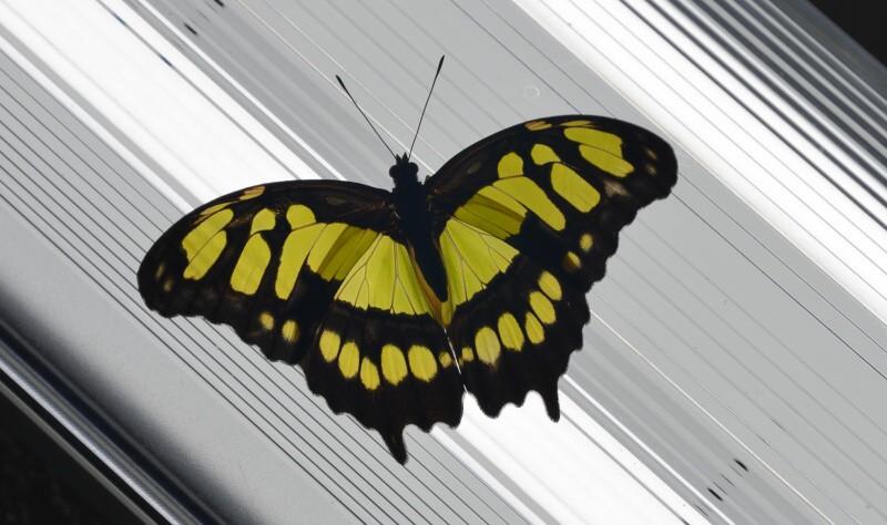 karlovy vary motýlí dům