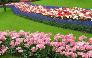 Keukenhof květinový park Holandsko