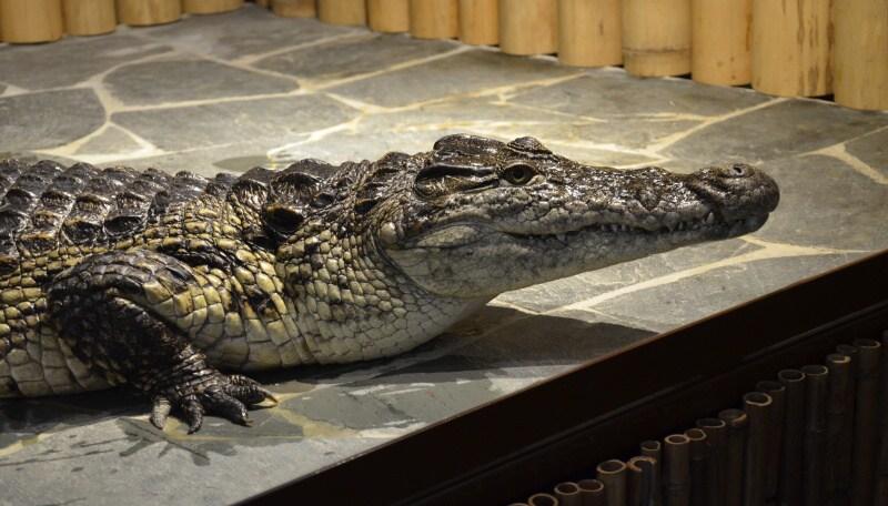Krokodýlí zoo Praha Holešovice
