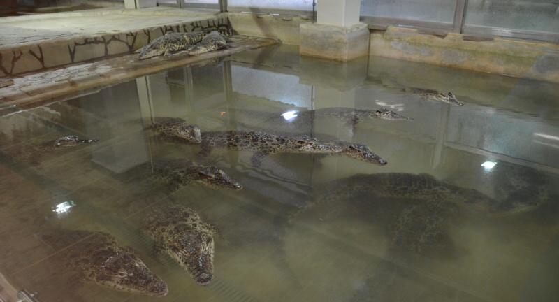 krokodýlí zoo protivín 1