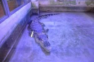krokodýlí zoo protivín 2