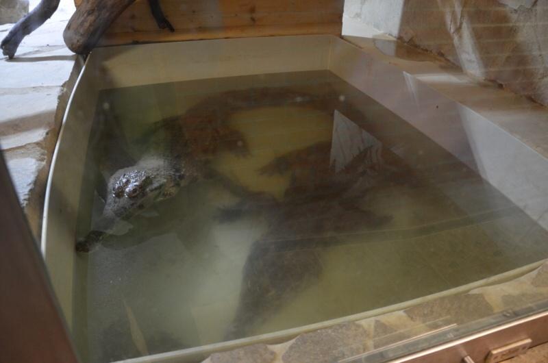 krokodýlí zoo protivín 3