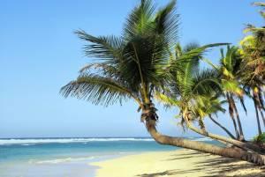 kuba moře palmy