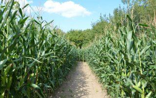kukuřičné bludiště olomouc
